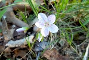 Sweet little candy flower.